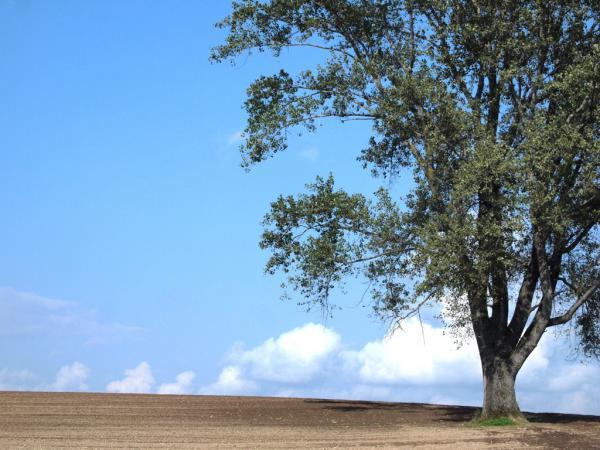 哲学の木3