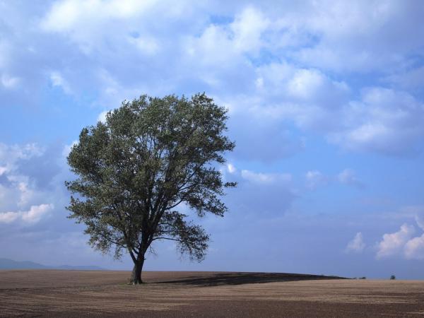 哲学の木4