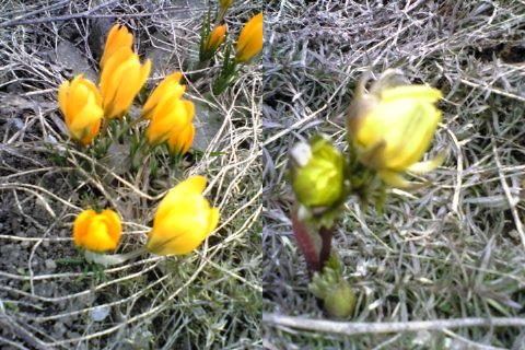 春咲きました