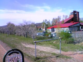 余市川堤防の桜その