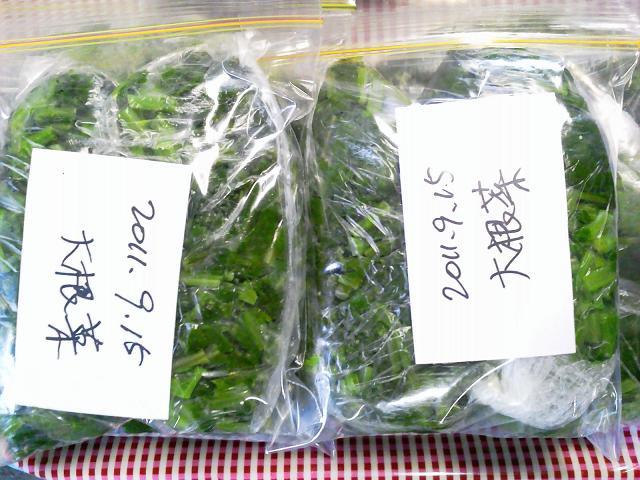 大根菜の保存