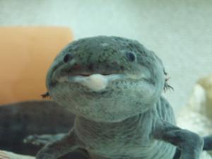 スライムチョメ