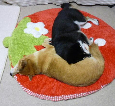 腹枕の季節