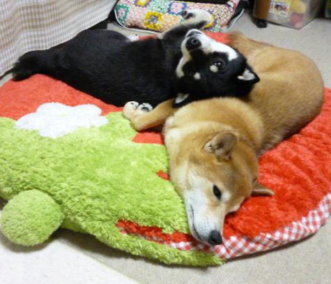 腹枕の季節 1