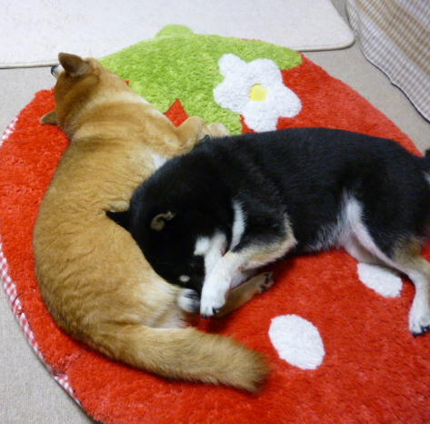 腹枕の季節 3