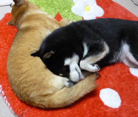 腹枕の季節 2