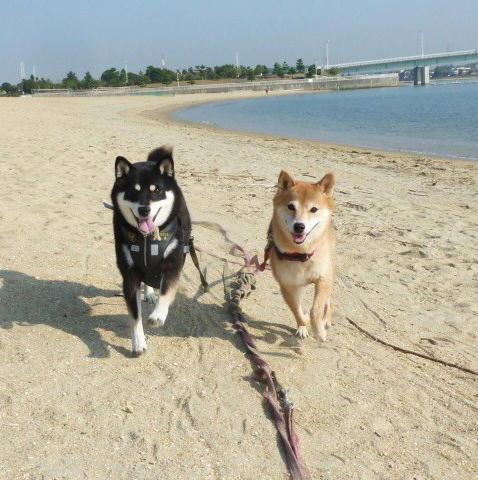 砂浜を走る
