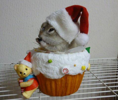 ソンさんのクリスマス