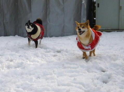 初積雪 2