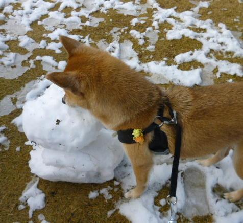 雪だるまとコロ