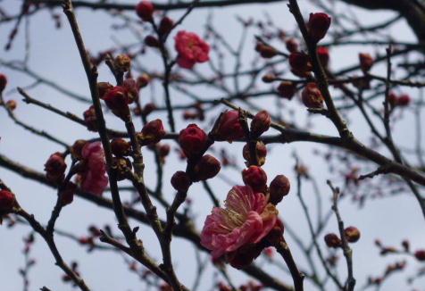 12 2 9 梅の花