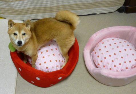 新しいベッド 1