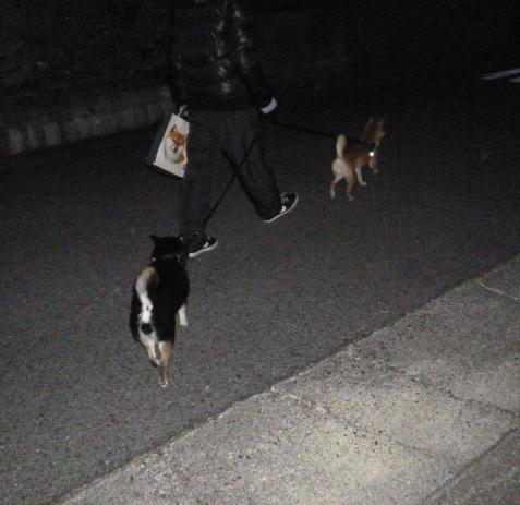 暗い時間にお散歩