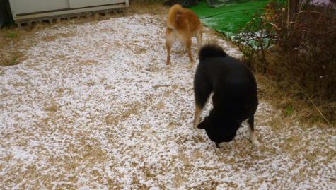 12 3 12  最後の雪