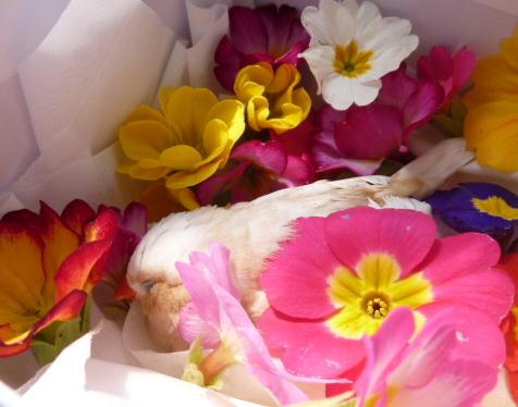 福ちゃんと花