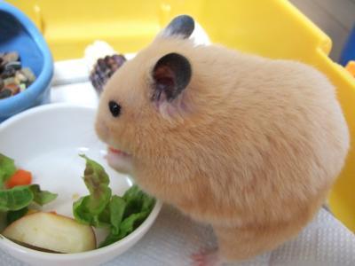 お腹すいたんだもん!