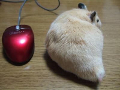 くまマウス