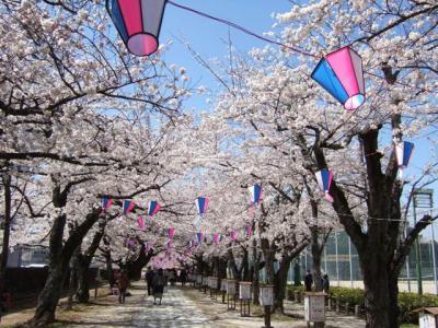 桜トンネル1