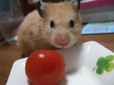 トマトは嫌い!