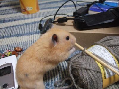 カジカジ編み編み。。