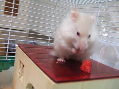 あっ、イチゴちゃん見っけ♪