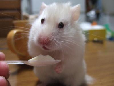 食べていいでチュか?