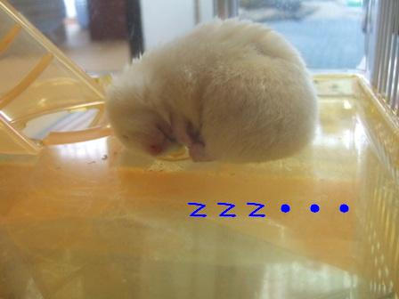 zzz・・・