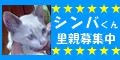 shinbana-2y.png