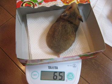 みそこ体重