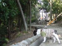 2008_0311佐世保バーガー0005