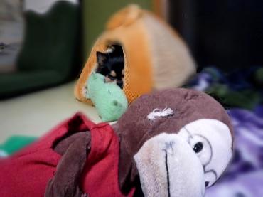 フクダと鯉太3