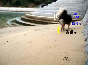 海大将鯉2