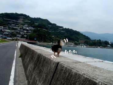 海大将鯉4