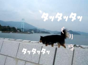 海大将鯉5