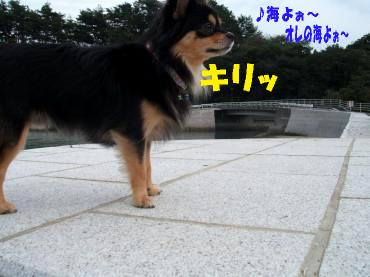 海大将鯉7