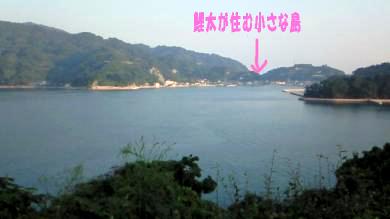 メタボ橋3