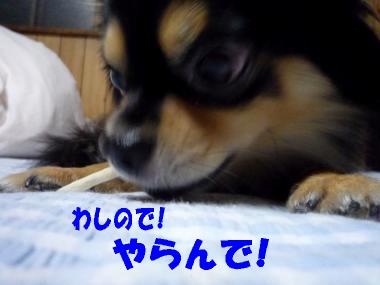 くれくれ鯉5