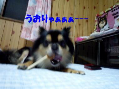 くれくれ鯉6