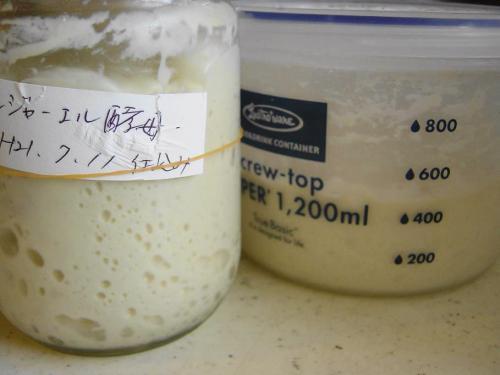 20090715ジンジャエール酵母元種&ルバーブ酵母元種
