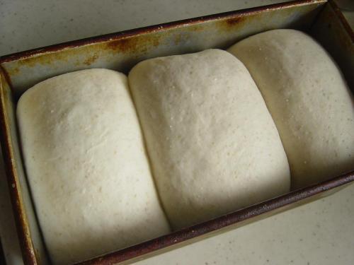 20090727ルバーブ酵母で山食仕上げ発酵完了.jpg