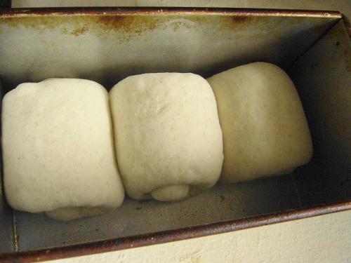 20090727ルバーブ酵母で山食成形完了