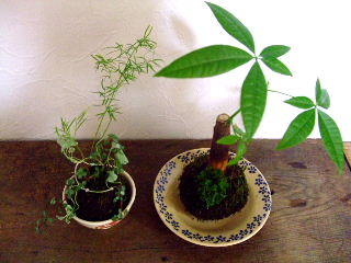 8月観葉植物の