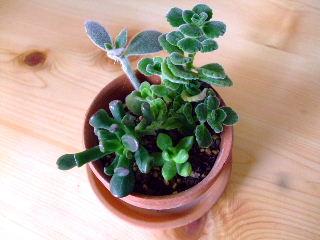 12ヶ月植物生活9月1