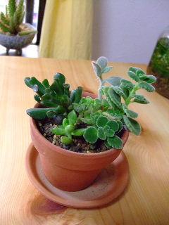 12ヶ月植物生活9月