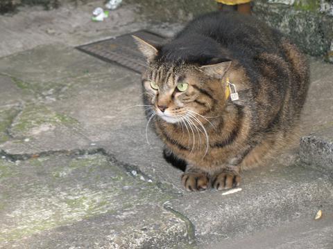 ゴールデン街の猫30