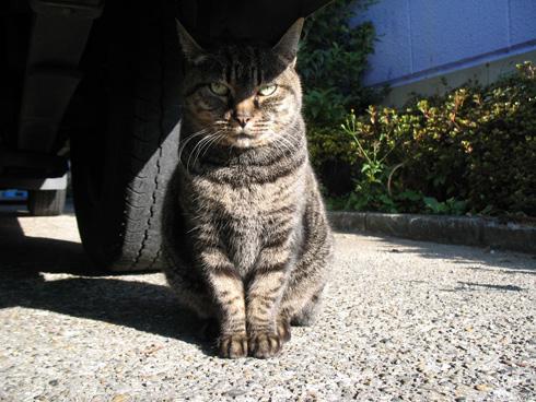 大和物産の猫