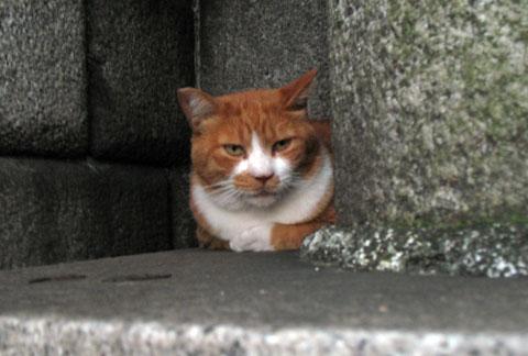 波除神社の猫1