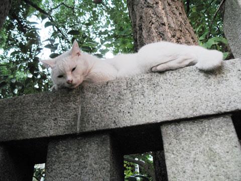 波除神社の猫2