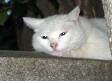 波除神社の猫3