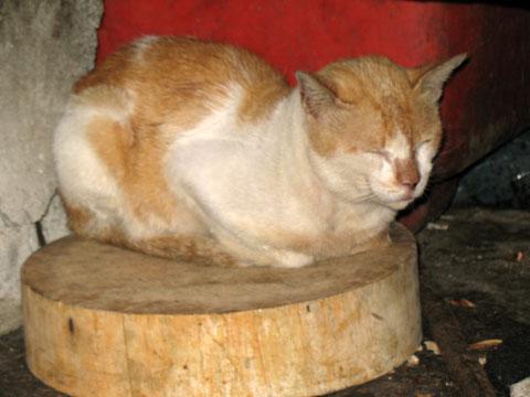 プラカノン市場の猫